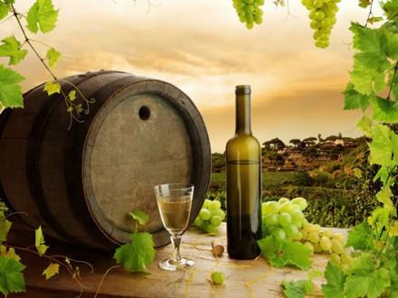 mendoza-tour-wine